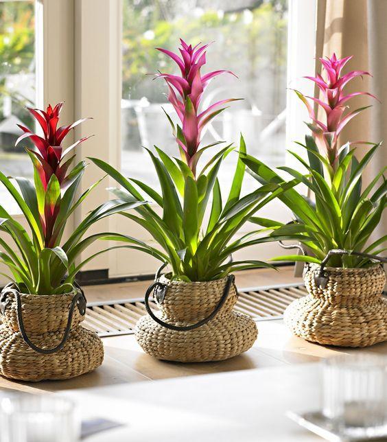De tien meest 'hufterproof' planten voor in huis | Doe-het-zelf Magazine