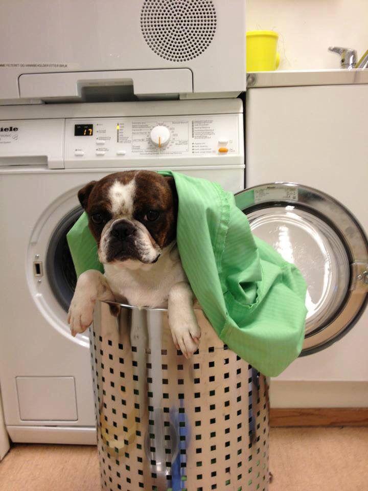 Nantaya hjelpe med klesvasken:)