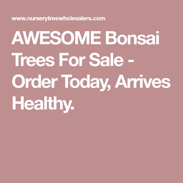 AWESOME Bonsai Trees For Sale - Order Today, Arrives Healthy.