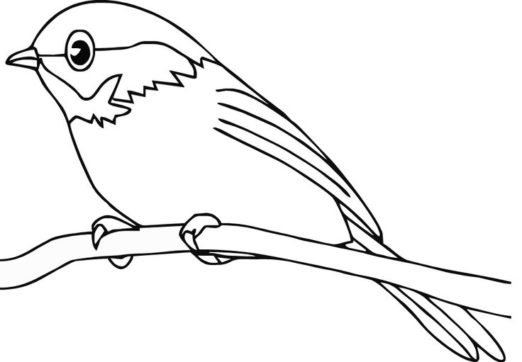 summer birds coloring pages - photo#20