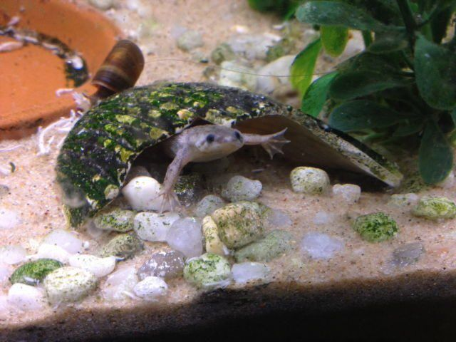 how to make a frog habitat in an aquarium