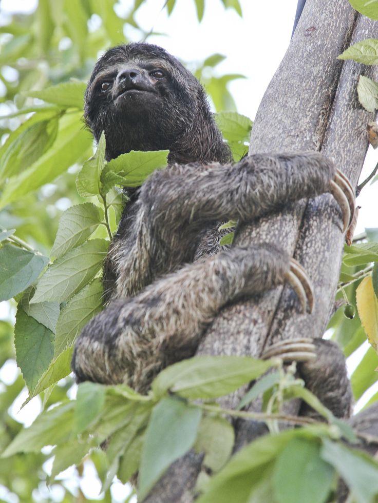 53 best rainforest images on pinterest rainforest
