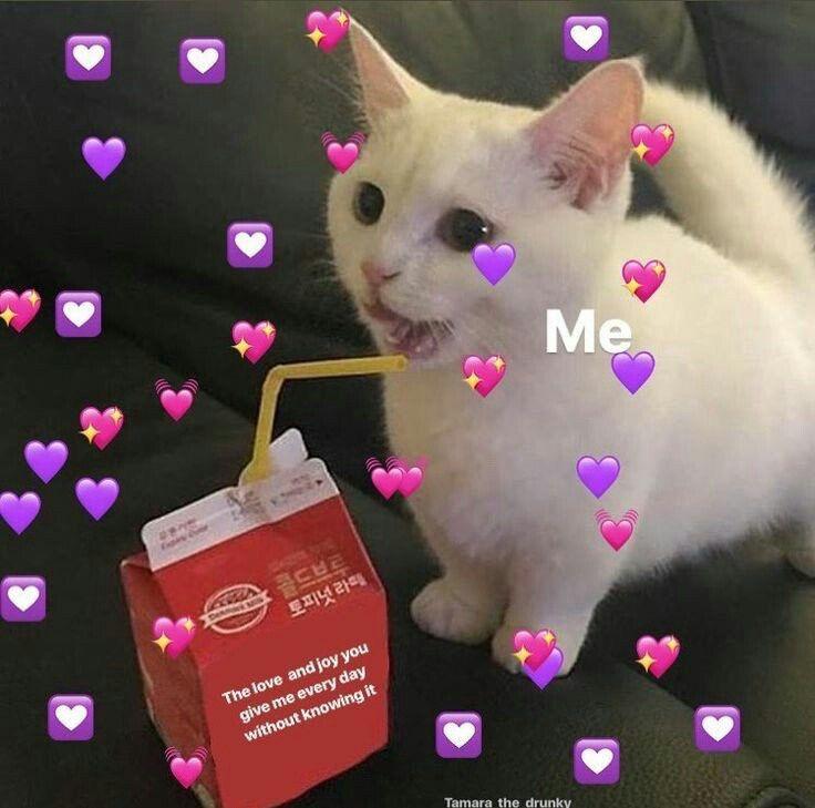 Pin By On Reactions Cute Love Memes Cute Cat Memes Cat Memes