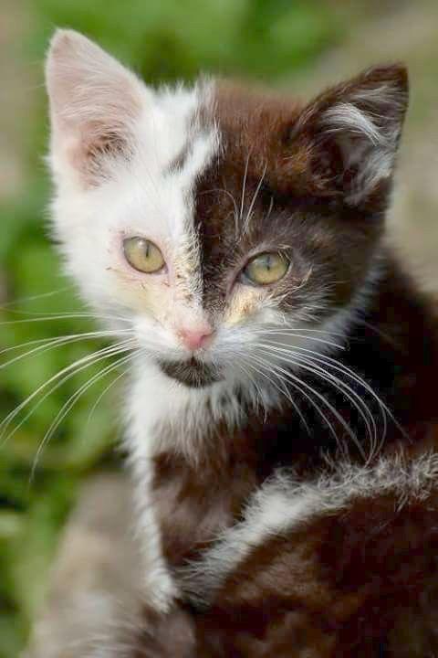 Süße Katze Gesicht Gif speichern süße Kätzchen Namen männlich und weiblich genug süße Bilder von … – Niedliche Tier Babys ❤❤❤