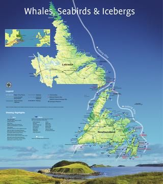 Whales, birds and icebergs map  A map of popular places to see whales, birds and icebergs in Newfoundland and Labrador.