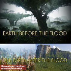 GIANT TREES BEFORE THE FLOOD! No Trees on Flat Earth-Biblical ...