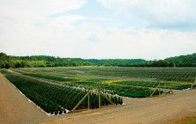 Container Farm - Our 260 acre container #farm in Georgetown, Ontario, is conveniently located approximately 50 kilometres northwest of Toronto. We produce a wide range of container grown #plants ranging in size from 1 gallon up to 45 gallons and 25 acres of Pot-N-Pot tree production.