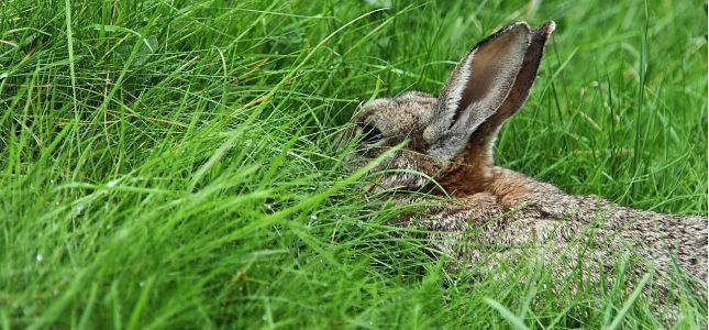Het fokken van eigen vleeskonijnen heeft veel voordelen. Om konijnen op een diervriendelijke manier te fokken is er kennis nodig wat hier word besproken.