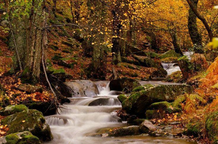 """1La senda ecológica del Puerto de Canencia es como dice Rubén: """"Una joya del otoño madrileño"""". Forma parte de la Sierra de Guadarrama y tiene un recorrido de 7kilómetros que pasa por rincones como el arroyo del Sestil. ¡Porque Madrid es mucho más que ciudad! Esta guía lo demuestra."""