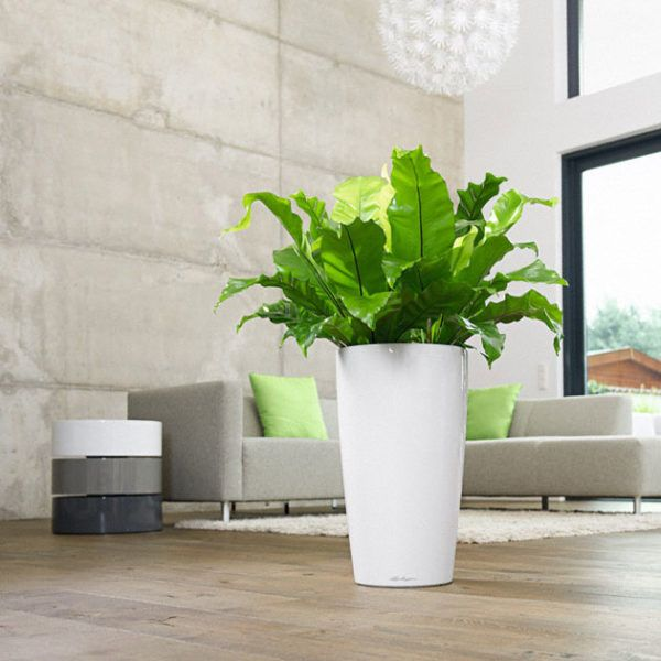 RONDO Premium's graceful shape perfectly showcases both short and tall plants and plant ensembles, and it fits perfectly with the versatile CLASSICO planters. The unique sub-irrigation system takes care of your plants for you for up to 12 weeks, ensuring that they receive the right amount of water and nutrients they need for optimum growth.