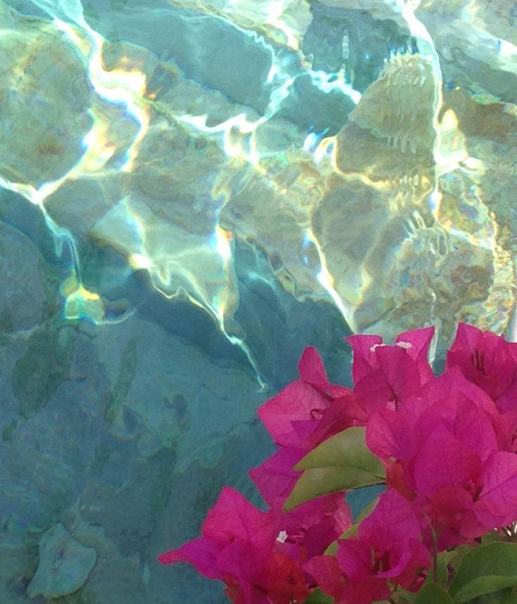 Mejores 61 imágenes de Bio en Pinterest | Suculentas, Arreglos ...
