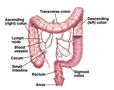 best 25+ sigmoid colon ideas on pinterest | appendix anatomy, Human Body