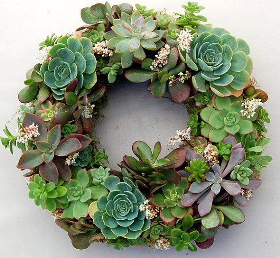 """Live Succulent Wreath on 12 inch diameter frame, from """"Fairyscape"""".    Made using succulents and organic soil wrapped around with moss. Will continue to bloom and grow with watering (once a week) and some sun exposure."""