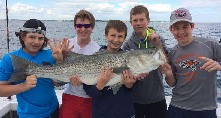 21 best striped bass fishing images on pinterest bass for Massachusetts saltwater fishing regulations