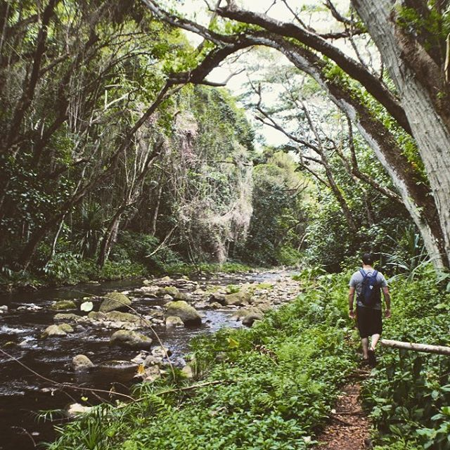 Longing to be back in the warm weather and daydreaming about our hikes in Kauai #kauai #discoverkauai