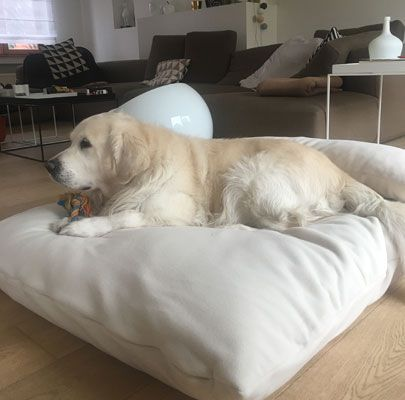 Orthopädisches Hundekissen mit Kopfkissen. Orthopedic dog cushion with head pillow Cuscino cane ortopedico con cuscino testa