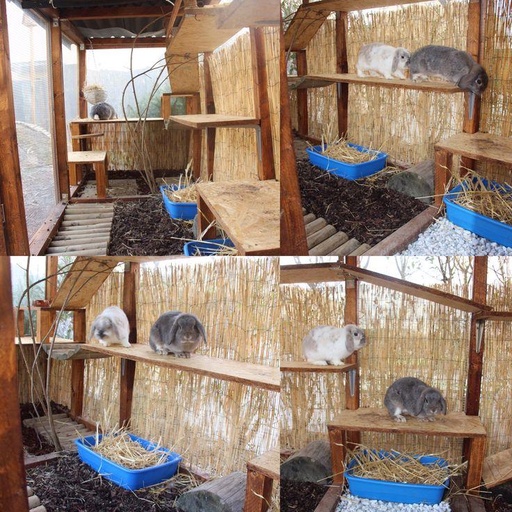 kaninchen stall artgerechte kaninchen haltung pinterest. Black Bedroom Furniture Sets. Home Design Ideas