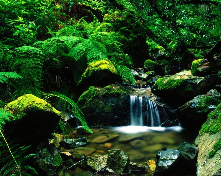 nature-fern-flowing-forest-park-river-shrubs-trees-waterfall-790265.jpg (2560×2048)