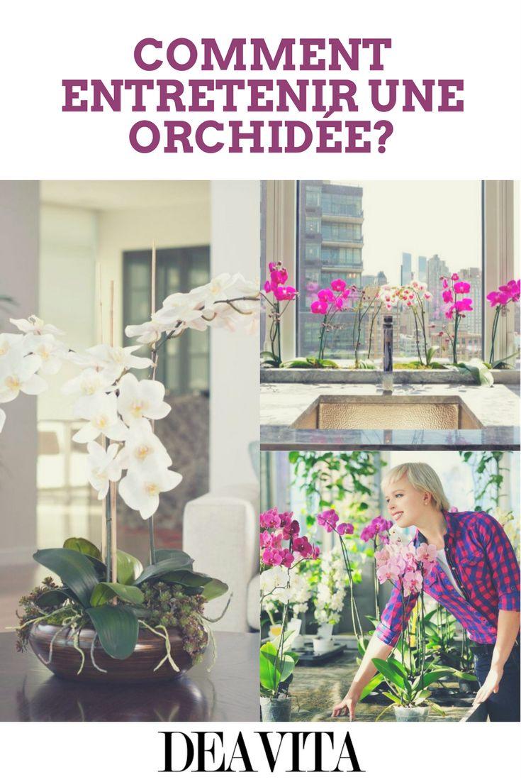 Les 25 meilleures id es de la cat gorie question de culture g n rale sur pinterest portraits - Comment entretenir une orchidee ...