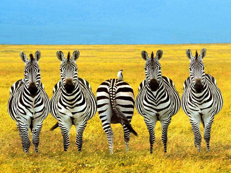Funny African Animals 18 Desktop Wallpaper