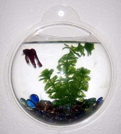 19 best images about cool fish and fish tanks on pinterest for Cool fish bowls
