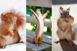 Animaux : Actus, photos, vidéos - Animal Story