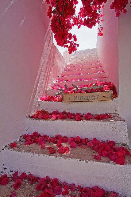 Red flower blooms grace the stairs in Bougainvillea Stairs, Santorini, Greece.