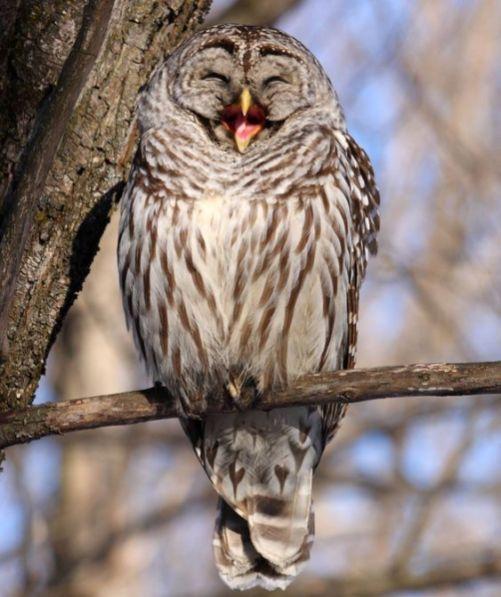 Funny Owls 39