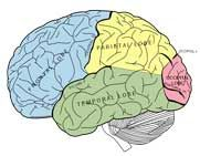Seminar: Using Neuroscience to Engage Students http://www.educationworld.com/a_curr/seminar-neuroscience-student-engagement.shtml