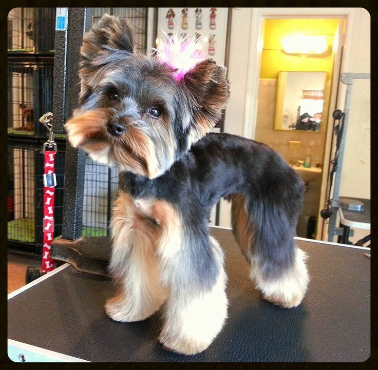 49 best pet space images on pinterest kennel ideas dog grooming bella the yorkie solutioingenieria Images