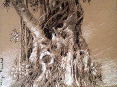 Sketching of a tree trunk on Canson Mi Teintes paper using charcoal pencil and white soft pastel pencil