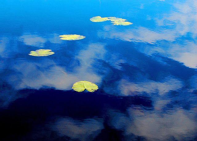 lumpeet, lake, lapland, water lily