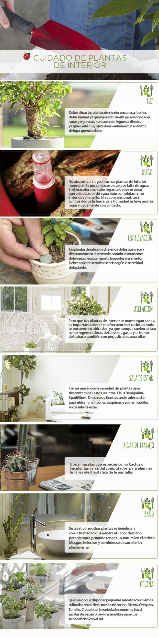 #Jardín #Easy #Plantas #Cuidado