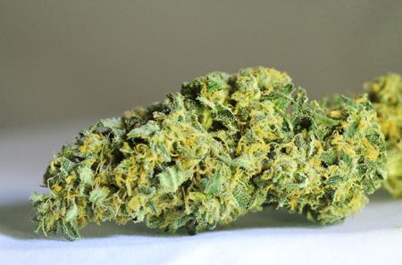 how to buy medical weed in colorado