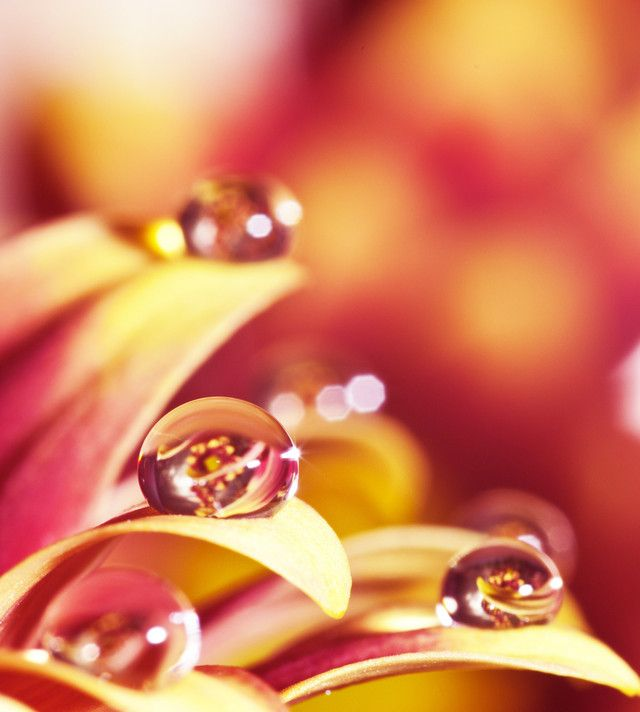 Drops (Colorful-Liquid-Photography-By-Paul-Quinn)