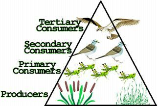 Very simple set of ecology notes online