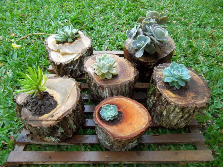 troncos com suculentas