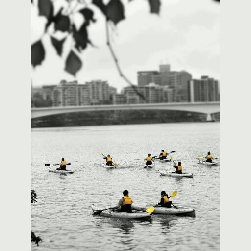 A #throwbackthursday to a rainy morning in #Brisbane strolling by the #BrisbaneRiver. I spotted this canoeing lesson and couldn't resist taking the shot