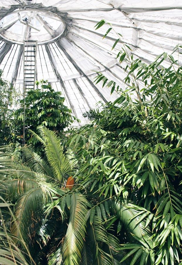 Copenhagen Botanical Garden | These Four Walls blog