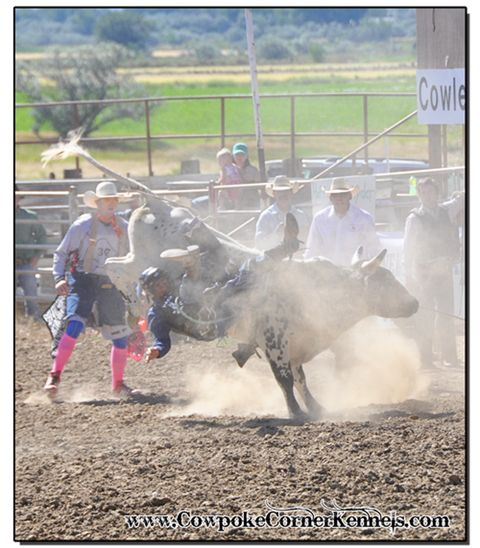 Tooth Fairy also knows how to leave the chutes and the cowboy! He is really spinning up some dirt! Like a tornado this guy! Bull-riding 0699