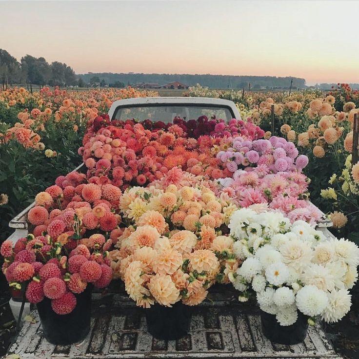 """TULAROSA on Instagram """"field of beauty 😍 floretflower"""
