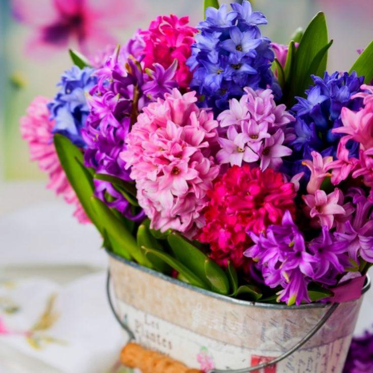 Gardenesia- Buy #Plants Online India - Best Online #Garden Store in India