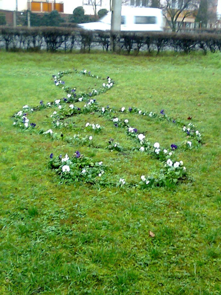 Püspökladány, Violinkulcs virágból.