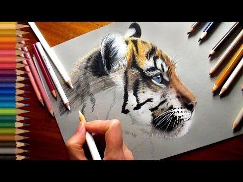 Colored Pencil Drawing: Tiger Cub | Jasmina Susak - YouTube