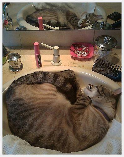 cats love sinks