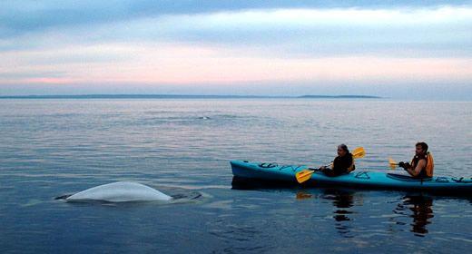 The Whales  :)   #GILOVEMANITOBA
