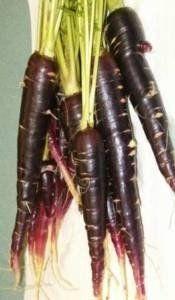 Turkish Black Carrot - Daucus Carrota - Heirloom - 10 Seeds