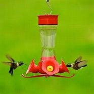 The Hummers Are Back!