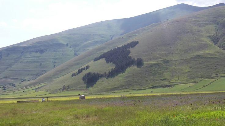 Italy trees in Castelluccio of Norcia - Umbria