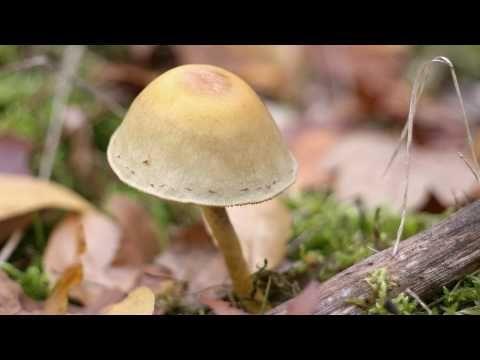 De Vier Jaargetijden - De Herfst